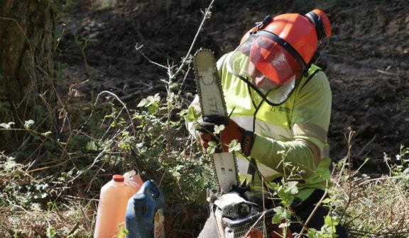 Pautas de seguridad laboral en trabajos forestales durante la pandemia del COVID-19