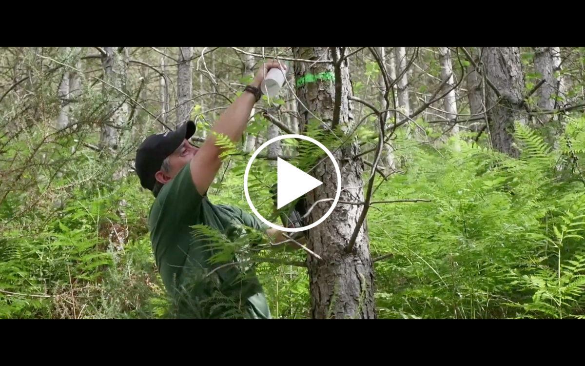 Vídeo de presentación del Proyecto INNOBANDAS