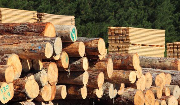 Las empresas de carpintería y mueble principales afectadas en el sector forestal madera por la COVID-19